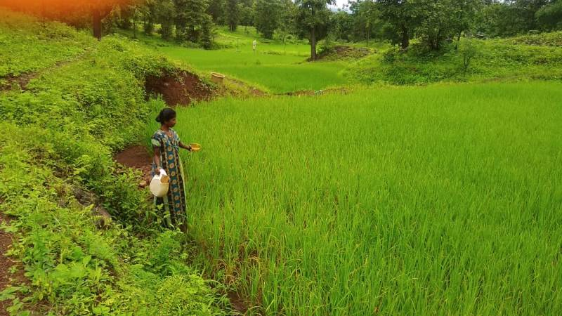 agricultura sostenible india