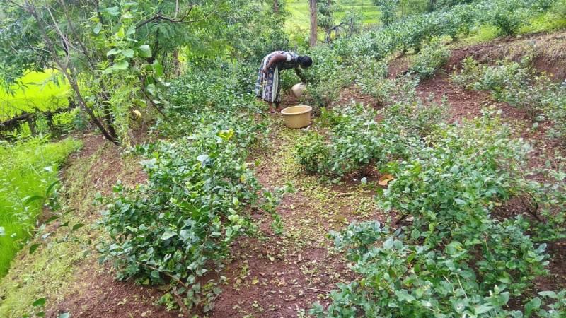 mujer trabajando tierra